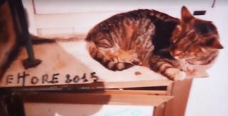 Ettore, il gatto dei pescatori