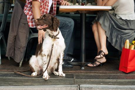 I cani percepiscono le emozioni umane: lo rivela uno studio della Federico II