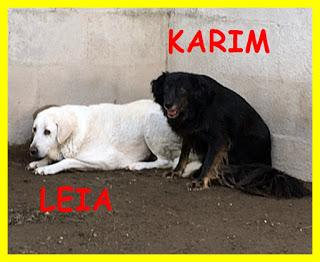 Doppio miracolo cercasi! Adozione di coppia per Leia e Karim, perché possano trascorrere l'ultima parte della loro vita al sicuro