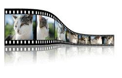 Creare video può rivelarsi molto utile per ottenere visitatori e portare il tuo blog al successo.