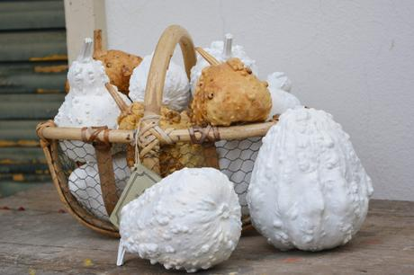 #fioridivenerdì  –  –  –  –  –  zucche decorative dipinte di bianco