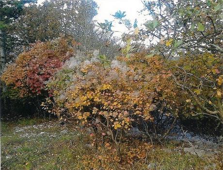 Carso triestino in autunno: cosa visitare lontano dal turismo di massa