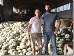 Halloween, prodotte 400mila zucche tra Milano, Lodi e la Brianza