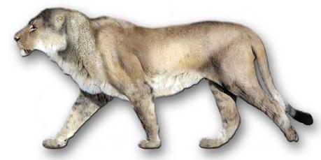 Panthera leo atrox