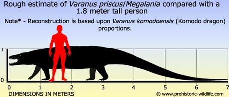 Varanus priscus