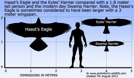 Aquila di Haast