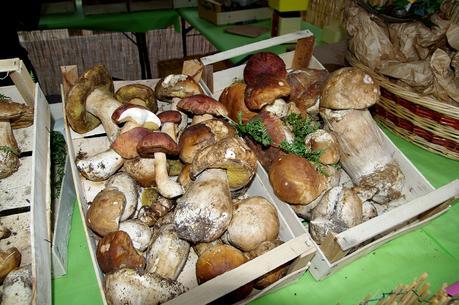 Sagra dei Funghi e la Festa della Tammorra a San Giuseppe Vesuviano