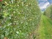 Nato l'erbicina naturale dalle erbe infestanti
