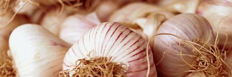 Liguria: l'aglio di Vessalico in una fiera lunga 257 anni