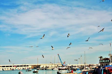 mare, gabbiani, porto, cielo, nuvole