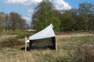Germania: perso il 75% della biomassa degli insetti alati!