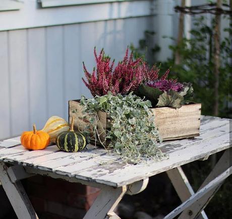 L'immagine può contenere: pianta, fiore e tabella