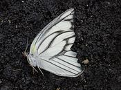 Recensione: giardino delle farfalle