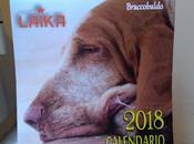 Pronto calendario 2018 delle associazioni Quintomondo L'Isolachenonc'è...12 mesi coccole tenerezza