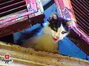 serial killer gatti Roma continua mietere vittime. Perché nessuno interviene?