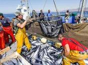 """L'Unione europea(Ue) dice soddisfatta degli accordi sulla pesca Marocco riferisce """"Atlas info"""""""