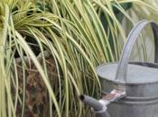 #segretidellanonnaingiardino Annaffiare l'acqua cottura