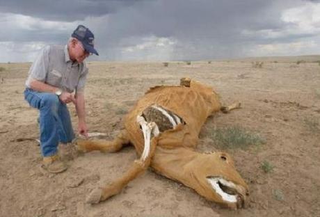 Le mutilazioni umane: strano fenomeno misterioso