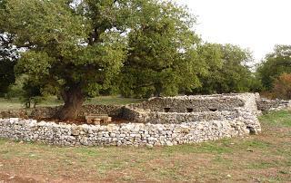 Il Ministro delle politiche agricole alimentari e forestali censisce 14 alberi monumentali sul Gargano