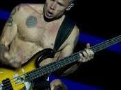 Identità Musicale: Flea Chili Peppers