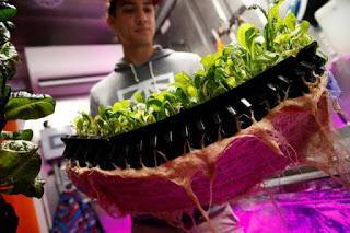 A New York la verdura a Km0 cresce nei container