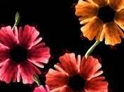 Un'esplosione corpi fiori!