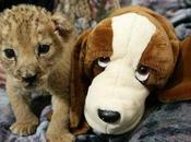 Animals with Stuffed Animals, sito tutto coccole tenerezza