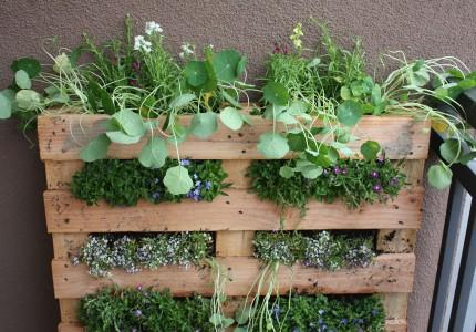 Come trasformare un pallet in un orto verticale da balcone/ How to turn a pallet into a vertical urban garden