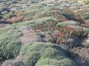 centaurea horrida Astragalus associazione
