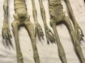 mummie aliene Nazca, parla Jaime Maussan