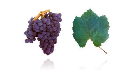 Un vitigno Portoghese ideale, ed economica, alternativa al Barolo