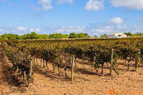 12 Cose da fare e vedere a Formentera – Non solo spiagge