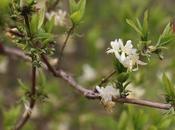 #fioridivenerdì piccoli fiori d'inverno profumati