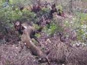 Narni, impraticabile pericoloso sentiero turistico verso l'Abbazia Casciano