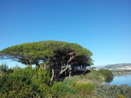 Una Cannes e l'Ile de Sainte Marguerite