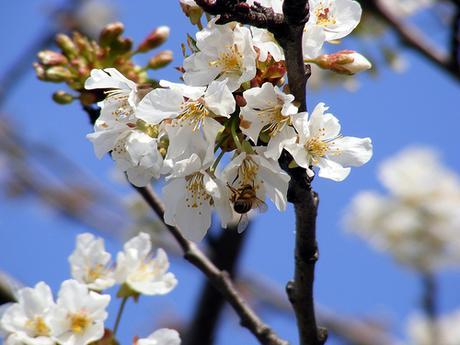 Primavera fiori