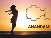 cosa l'anandamide?