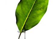 Keraplant Nature, perfetto connubio natura tecnologia cura capelli