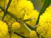 mese colore giallo