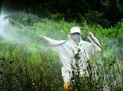 Glifosato, pesticida pericoloso: firma petizione abolirlo