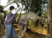 Come scegliere Elephant Camp etico cruelty free Chiang