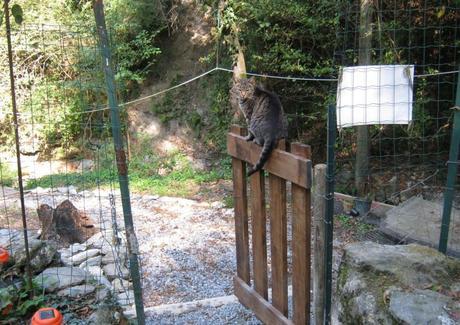 Riempi la ciotola by Schesir: Oasi dei mici felici onlus Liguria