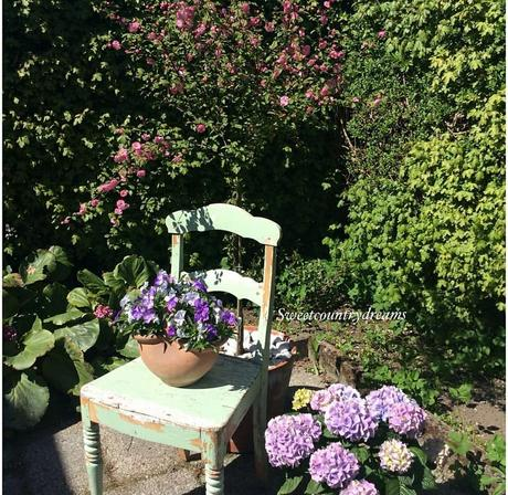 L'immagine può contenere: persone sedute, pianta, fiore, albero e spazio all'aperto