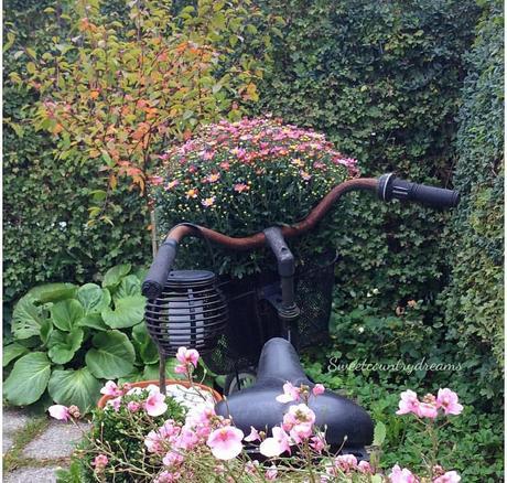 L'immagine può contenere: pianta, fiore, spazio all'aperto e natura