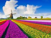 primavera-estate spinger) downshifter/declutterer compulsivo ovvero come godere della stagione rinascita