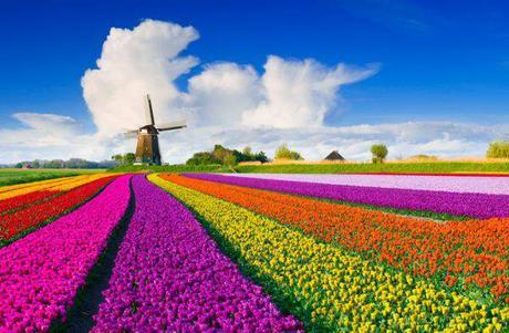 la primavera-estate (lo spinger) del downshifter/declutterer compulsivo - ovvero come godere della stagione della rinascita