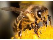 api, queste sconosciute degne ammirazione