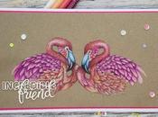 increbile pink friend