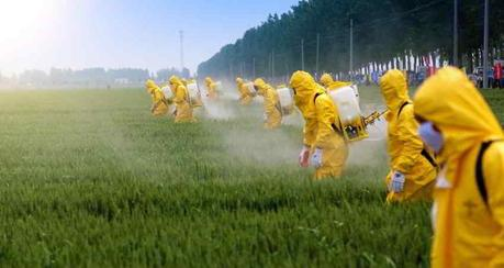 Pesticidi: sono la causa del morbo di Parkinson
