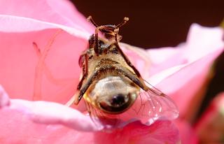 Ali, antenne, pungiglioni, pistilli, petali, foglie, nettare e polline